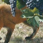 fox-vineyard2